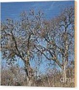Light Posts And Trees Wood Print
