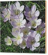 Light Purple Crocus Flowers In Spring Wood Print