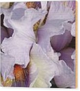 Light Purple Irises 2 Wood Print