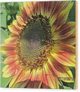 Light-shade Sunflower Wood Print