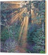 Light Shine Wood Print