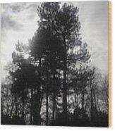 Light Through The Trees Wood Print