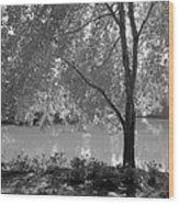 Light Tree Wood Print