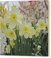Light Yellow Daffodils Wood Print