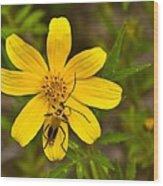 Lightning Bug On Flower Wood Print