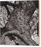 Lightning Tree  Wood Print