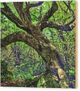 Likin Lichen - Blue Ridge Mountains Wood Print