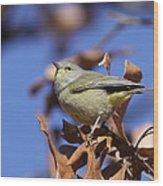 Lil' Bit - Orange-crowned Warbler Wood Print