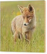 Lil' Hunter - Red Fox Cub Wood Print