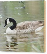 Lila Goose Queen Of The Pond 2 Wood Print