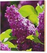Lilac Bloom Wood Print