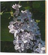 Lilac Branch Wood Print