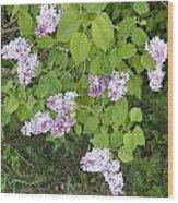 Lilac Bush Wood Print