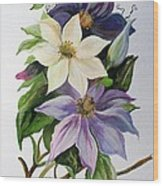 Lilac Clematis Wood Print