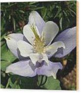 Lilac Columbine Wood Print