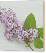 Lilac Flowers - White Background Wood Print