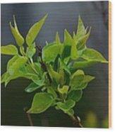 Lilac Leaves Wood Print