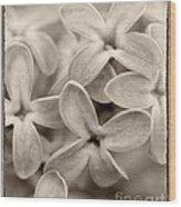 Lilac Macro Sepia Tone Wood Print