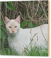 Lilac Point Siamese Cat Wood Print