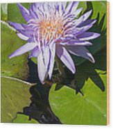 Lilac Water Lily Wood Print
