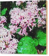 Lilacs After The Rain Wood Print