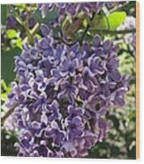 Lilac Beauty Wood Print