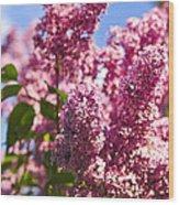 Lilacs Wood Print by Elena Elisseeva
