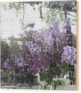 Lilacs Hanging Basket Window Reflection - Dreamy Lilacs Floral Art Wood Print
