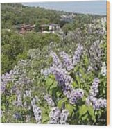 Lilacs On The Hill Wood Print