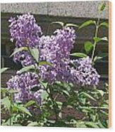 Lilacs Up Against The Wall Wood Print