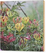 Lilies Of Color Wood Print