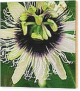 Lilikoi Flower Wood Print by James Temple