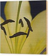 Lilium In Yellow Wood Print