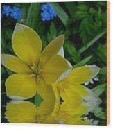 Lilium Of Gold Wood Print