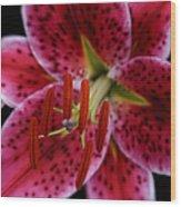 Lilium Pink Stargazer Wood Print