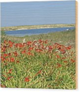 Lillies By The Lake Wood Print