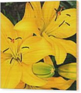 Lillies In Yellow Wood Print