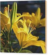 Lillies Of Gold Wood Print