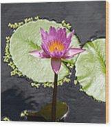 Lilly Lake Wood Print