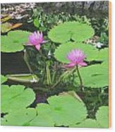 Lilly Pad In Hawaii Wood Print