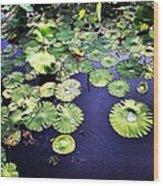 Lilly Pad Wood Print