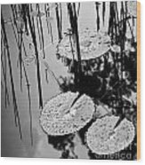 Lilly Pad Pond Black And White Wood Print