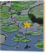 Lilly Pad Pond Wood Print