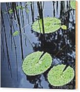 Lilly Pad Pond Wood Print