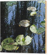 Lilly Pad Reflection Wood Print