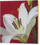 Lily Against Red Wall Wood Print by Garry Gay