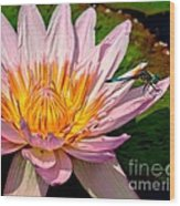 Lily And Dragon Fly Wood Print by Nick Zelinsky
