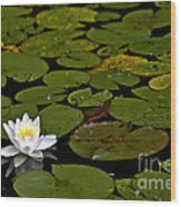 Lily And Pads Wood Print