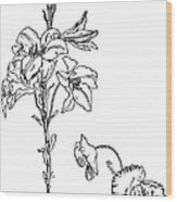 Lily And Poppy Flower Line Drawing Wood Print