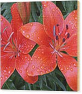 Lily Duet After The Rain Wood Print